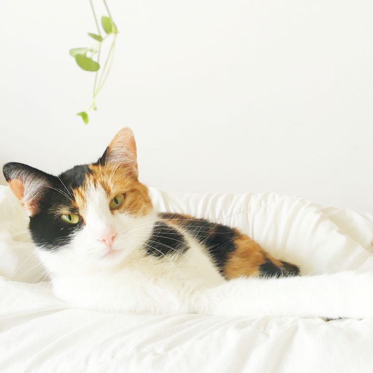 Cute cute cute ❤️ tricolor
