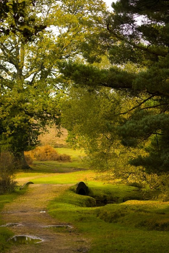 The New Forest - I have walked in this beautiful forest on a number of occasions