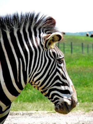 7 Latest Fort Wayne Zoo #Coupons & #Discounts #2017 #Fort Wayne #Indiana #fortwaynezoo #thingstodo #travel #vacation http://www.theknowandgo.com/fortwaynezoocoupons