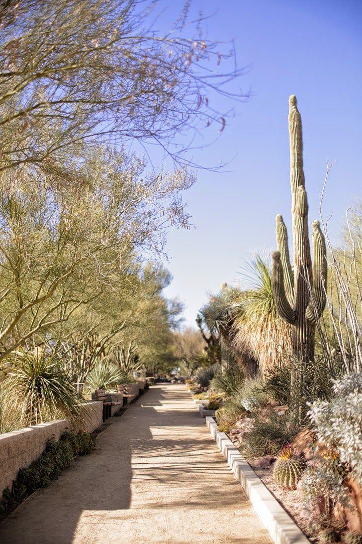 25 Best Ideas About Landscaping Las Vegas On Pinterest