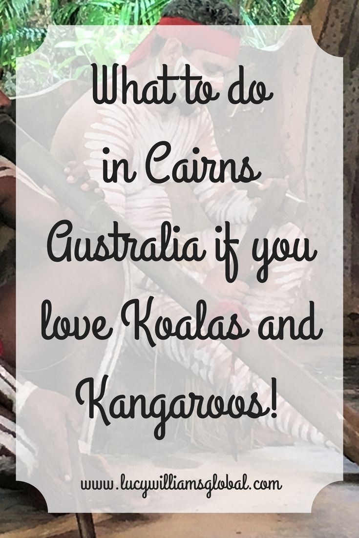 What to do in Cairns Australia if you love Koalas and Kangaroos!Go to the RainForeStation Nature Park in Kuranda #australia #cairns #koalas #kangaroos #cruise