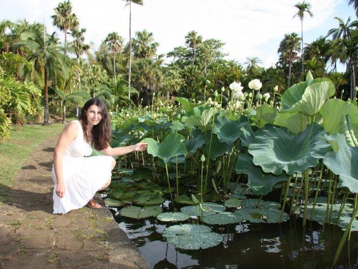Ботанический сад Памплемус. Белые лотосы