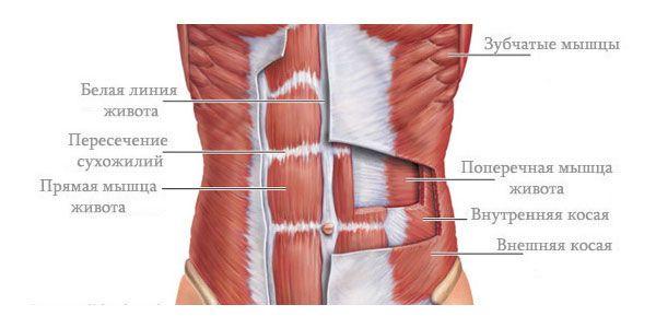 Мышцы живота. Упражнение Вакуум