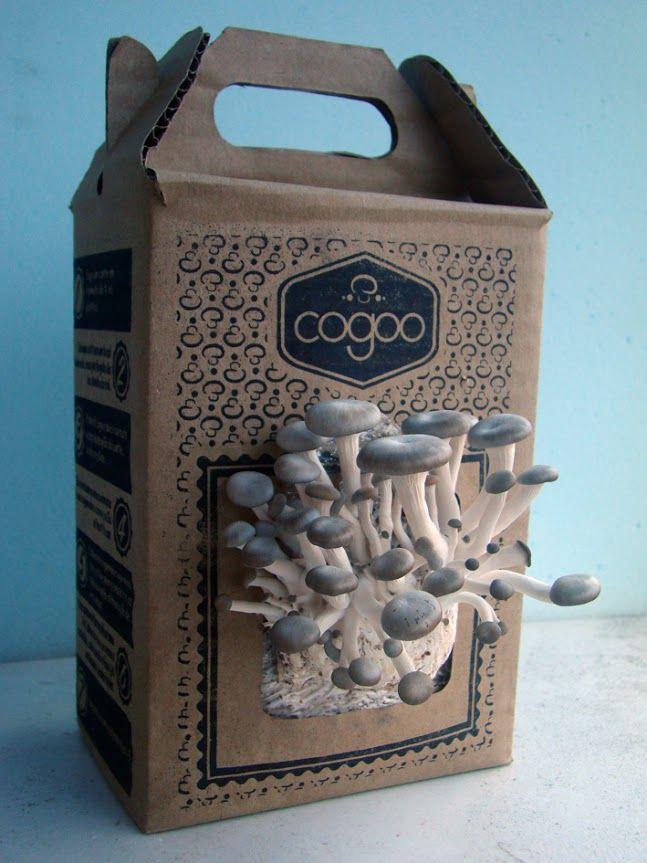 cultivo de cogumelos em casa