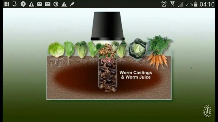 Wurmkompost mitten im Hochbeet