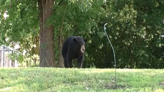 Concord Authorities Warn Residents of Black Bear