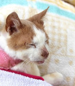 A Paralysed Stray Cat and a Dedicated Carer Experience the Beauty of Unconditional Love find this amazing photo from Katzenworld
