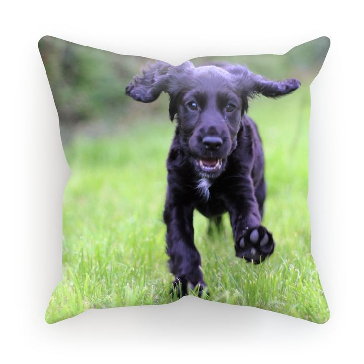 Cocker Spaniel by Kevin Diles Cushion