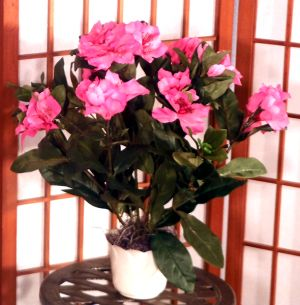 Brighten up any room with this Artificial Rhododendron Bush! Great for placing in niches, end tables; bookshelves, or even the en suite. Makes for a wonderful centerpiece either for indoors or outdoors. Comes potted in a decorative container filled with real moss.  Color Purple