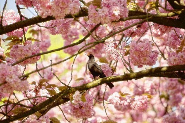"""""""Figyeld meg az életet: látsz valahol szomorúságot? Láttál már valaha depressziós fát? Vagy láttál már valaha szorongó madarat? Vagy idegbeteg állatot? Ugye nem? Az élet egyáltalán nem ilyen. Csak az ember tévedt el valahol.""""  (Osho)  Kép: Lars Van De Goor"""