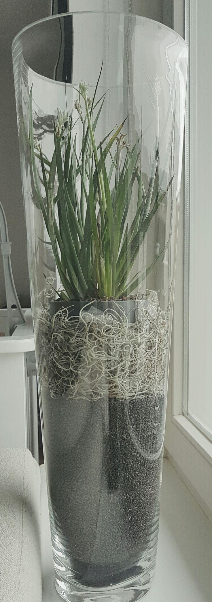 Opmaken van hoge vaas met deco steentjes en en plant