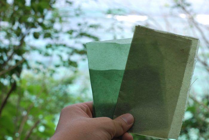 Egy indonéz startup hínárból készült csomagolóanyagot dobott piacra, ami ráadásul nem csupán biológiailag lebomló, akár ehető is!