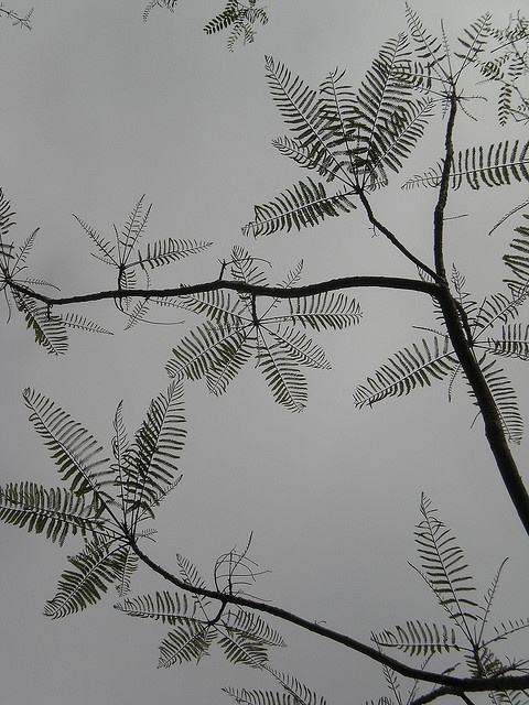 Plantes érotiques