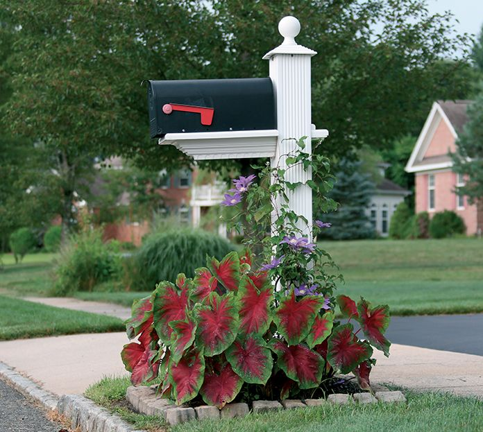 12 Amazing Ideas For Flower Beds Around Trees: Garden Around The Mailbox With Caladiums And Climbing