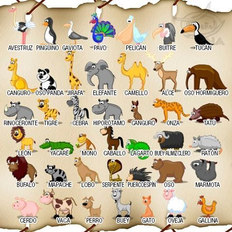 Los animales (ficha de vocabulario)