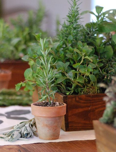 decorate with tiny potted herbs which we could then give as party favors or keep for ourselves! Mint would be especially easy to do, and would fall in with the lamby theme...