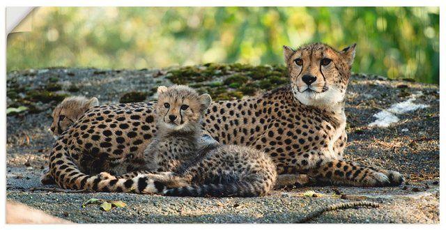 Premium Wandfolie »Elke Schmid-Neebe: Gepard 2«