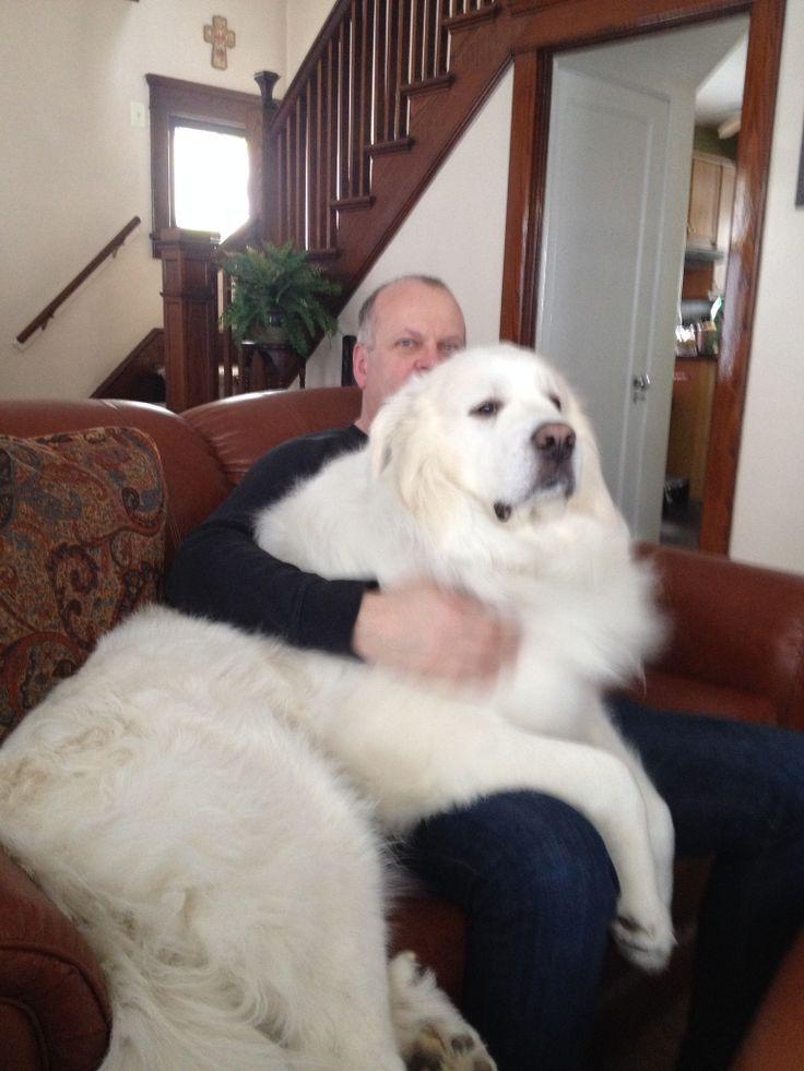 Best Low Maintenance Big Dogs