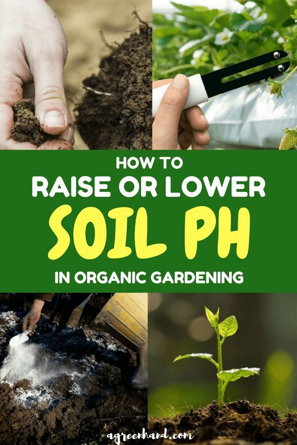 How To Raise Or Lower Soil Ph In Organic Gardening Organic
