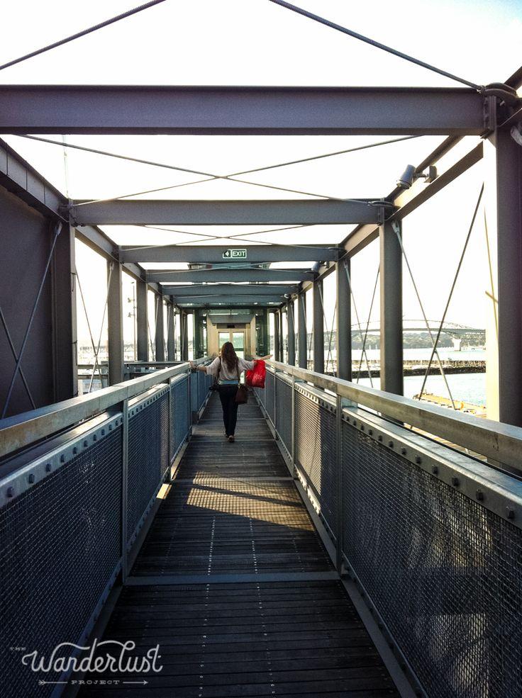 Exploring Auckland