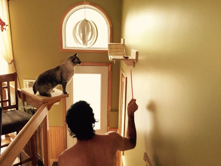Mobili gatto ~ Best mocaki cucine e mobili di design per chi ama i gatti