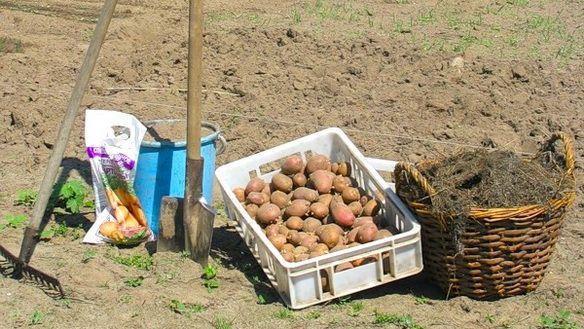 посадка овощей в поддоны: 8 тыс изображений найдено в Яндекс.Картинках