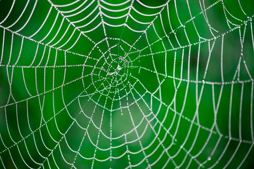 How Long Does It Take A Spider To Spin a Web?
