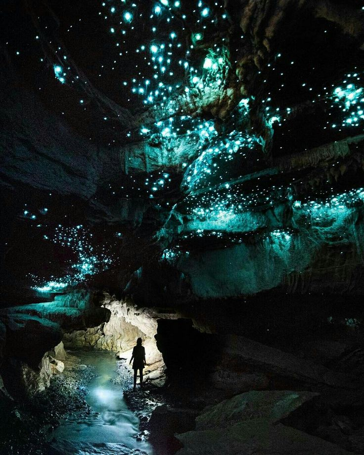Glow worm caves Waitomo, New Zealand