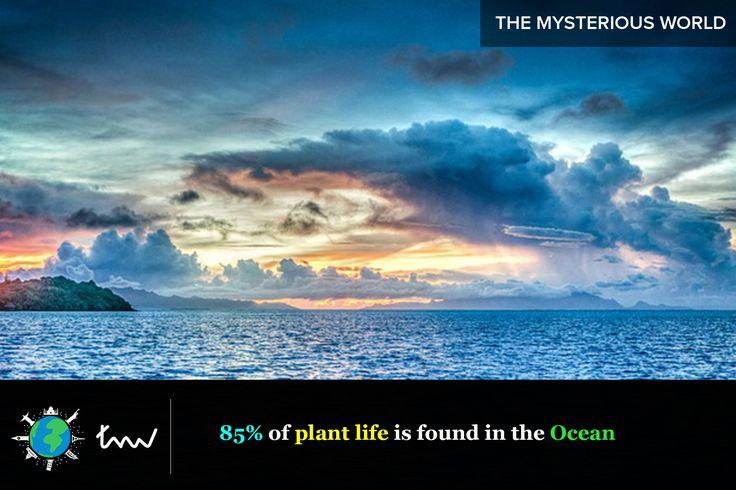 #oceans #plants #facts