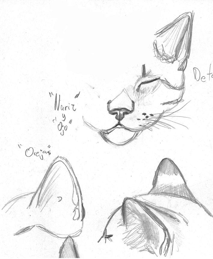 boceto de una cara de un gato de diferente perspectiva