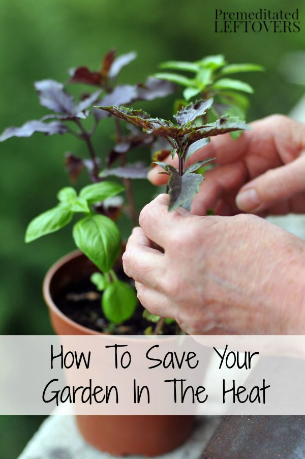 1000 images about home diy lawn and garden ideas on pinterest how to grow gardening tips - Gardening in summer heat a small survival guide ...