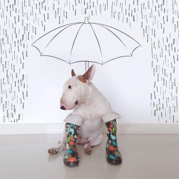 Le bull terrier Jimmy Choo, coup de cœur d'Instagram !   Glamour
