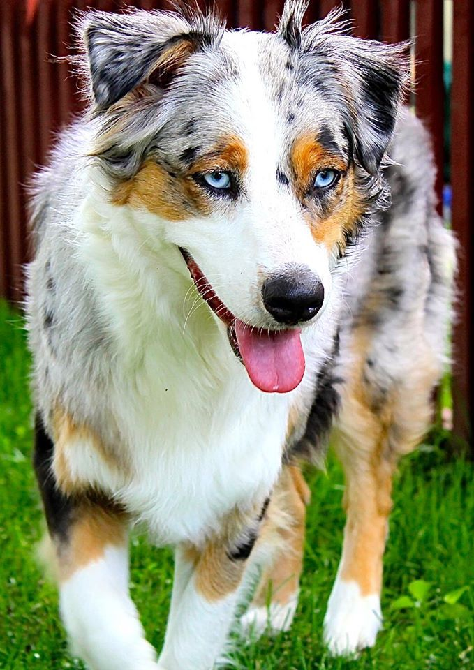 Frankie is a pretty sweet Girl named after Frank Sinatra because of her piercing Blue Eyes.