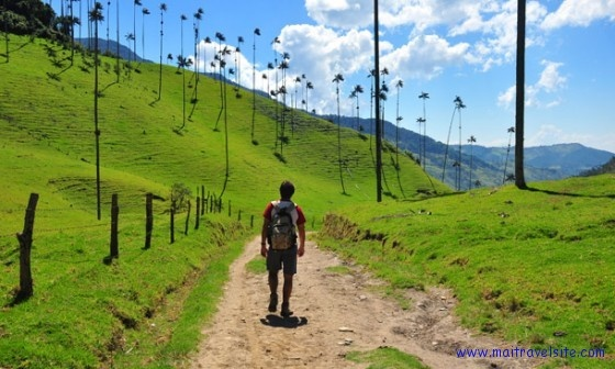 Walking along a path in Colombia's Valle del Cocora: Del Cocora, Colombia Vall, Bike Paths, Photography Plac, South America, Valley