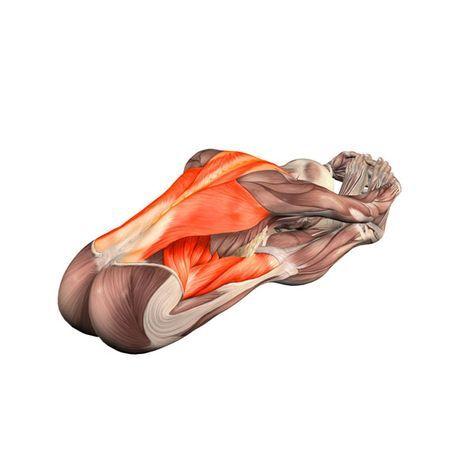 ૐ YOGA ૐ Paschimottanasana ૐ Pinza Sentada con Flexión hacia Adelante. Seated forward bend - Yoga Poses   YOGA.com