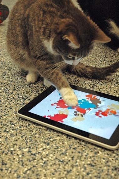 L.A. Animal Shelter Is Selling iPad Art Created by Cats (and People Are Buying It) - The Informer