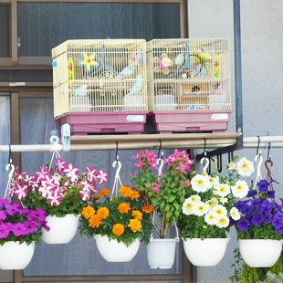Laundry Pole Hanging GardenBalconies Container Gardens, Balcony Container Gardens, Balconycontain Gardens, Hanging Gardens