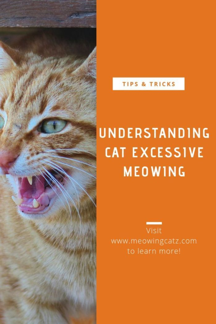 Why Do Cats Meowing Cats Cat Meowing At Night Cat Behavior
