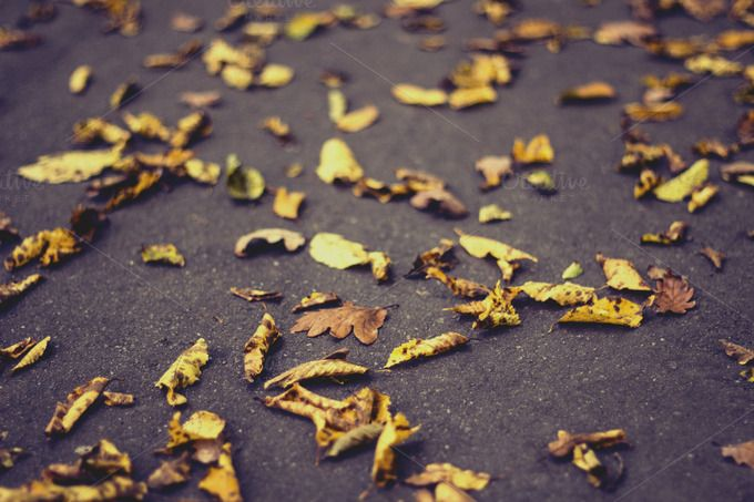 Check out Carpet of dry leaves by Pixelglow Images on Creative Market