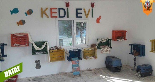 HBB Hayvan Barınağı Bünyesinde Kedi Evi Açıldı https://plus.google.com/+HatayInternetTv/posts/Fv7Pxf3DW2r