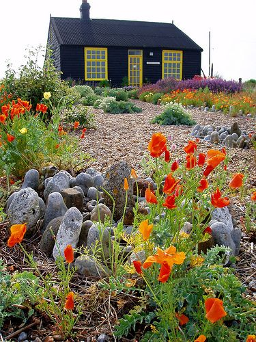 seaside cottage and garden~poppies grow well in the sandy soil....