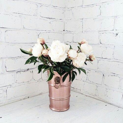 flowers, white, and rose -kuva