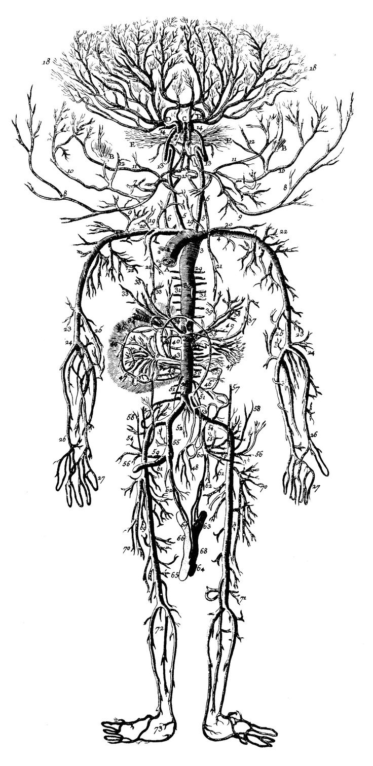13 best medical images on pinterest circulatory system anatomy