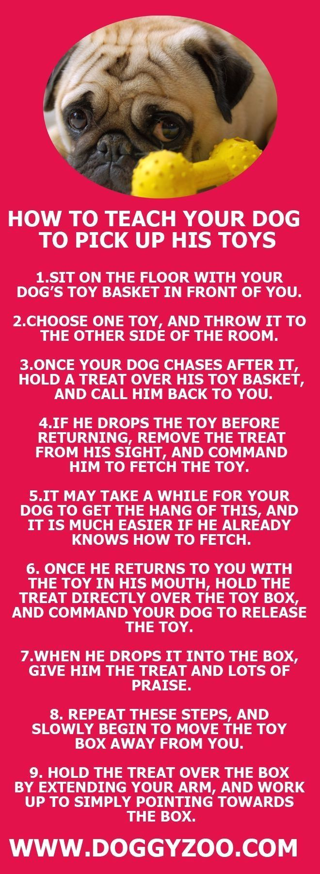 172 Best Puppy Dog Tales Images On Pinterest Doggies Treats But Doesn39t Do It Justice Here39 S What Looks Like From The Bike Basic Training Click Picture For Various Care And Ideas