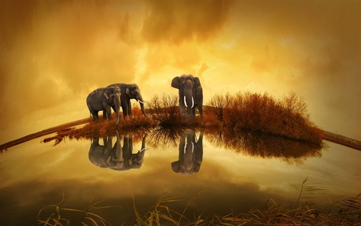 Download wallpapers elephants, wildlife, river, Thailand