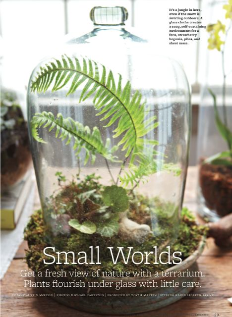 17 Best Images About Terrariums Cloches Bell Jars On