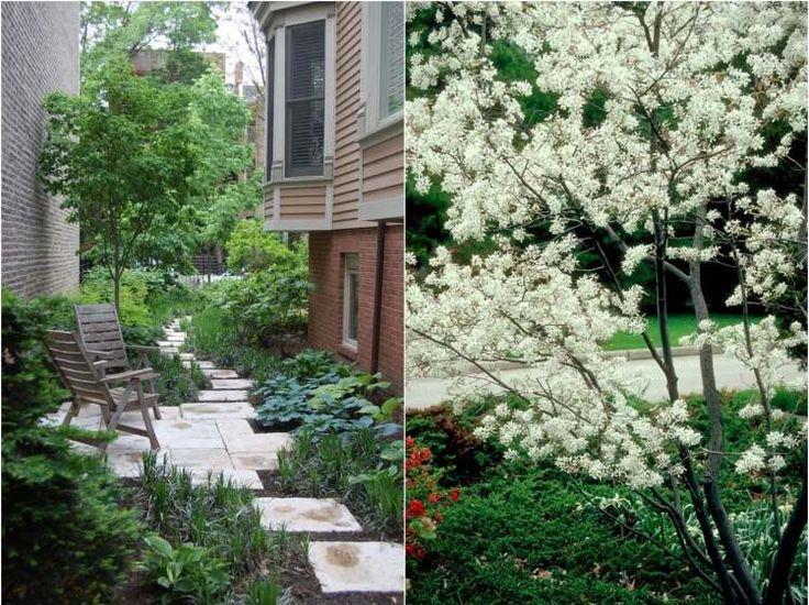 Arbre pour petit jardin les vari t s petit d veloppement design et d co - Arbre ombrage petit jardin argenteuil ...