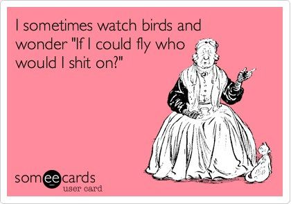 """I sometimes watch birds and wonder """"I I could fly who would I shit on?"""""""