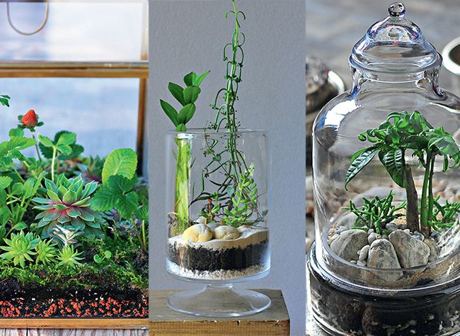 33 best terrarium et aquarium images on pinterest succulents botany and green plants. Black Bedroom Furniture Sets. Home Design Ideas