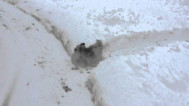 Long Island Man Creates an Adorable Backyard Maze for His Little Puppy Who Loves the Snow
